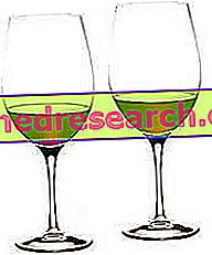 Vinho e Aterosclerose