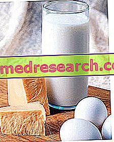 นมผลิตภัณฑ์นมและโรคกระดูกพรุน