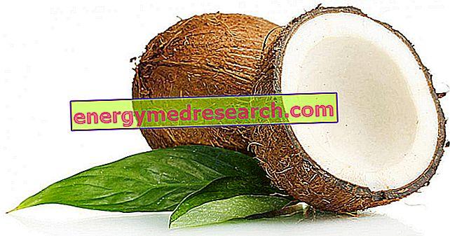 Zasićene masti u kokosu