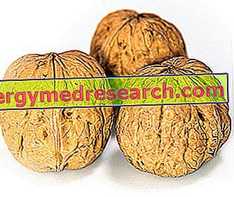Nötter och kolesterol