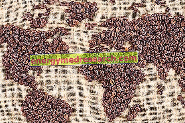 コーヒーレース