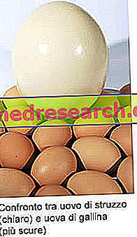 Nojska jajca