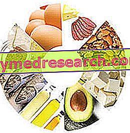 Alimentos ricos em gorduras