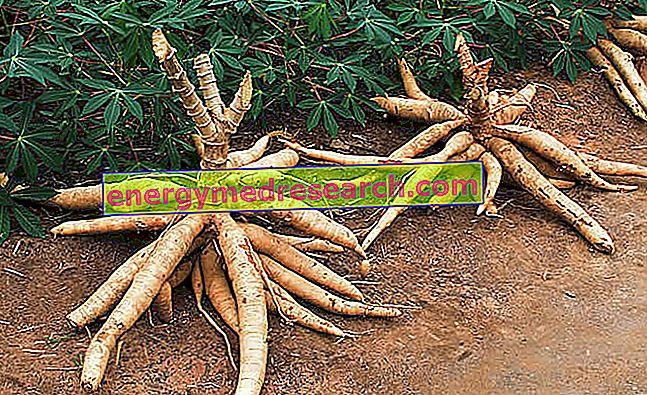 kassava