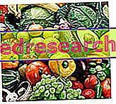 Τρόφιμα και βιολογικά προϊόντα