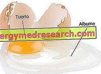 Kiaušinio baltymas