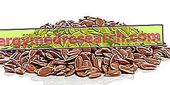Graine de lin et huile de lin: Cuisine et santé