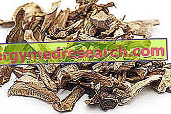 Džiovinti grybai iš R. Borgacci