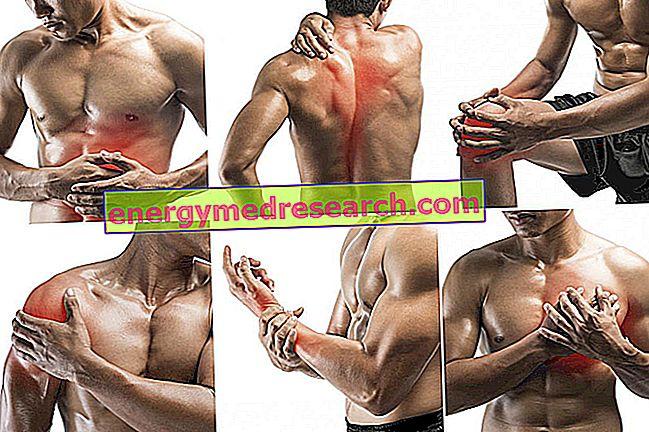 การยืดกล้ามเนื้อและ DOMS