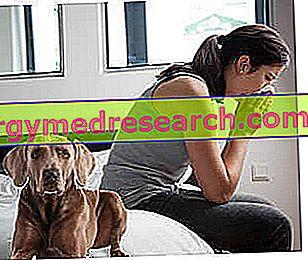 Alergija naminiams gyvūnams: simptomai ir diagnostika