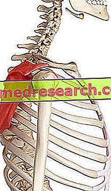 leziune la naștere a articulației umărului dacă articulația genunchiului este maltratată