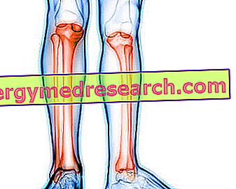 Tibia dan Perone: Apa itu?  Anatomi, Fungsi, Ossification dan Fraktur A.Griguolo