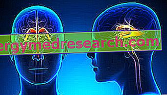 Cerebralne ventrikule A.Griguola