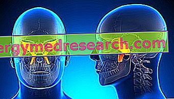 Sphenoid: Kaj je to?  Anatomija (lokacija in značilnosti), funkcija in klinična uporaba A.Griguolo