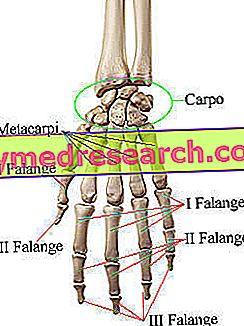 articulația degetului mare și arcul