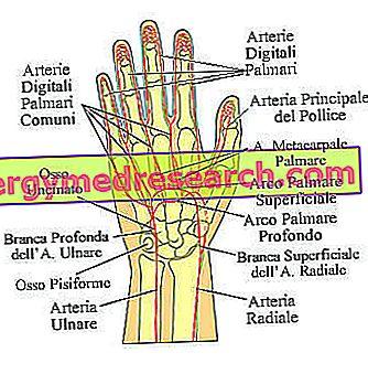 durerea articulației degetului de la prima falangă