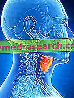 Laringe: ¿Qué es?  Anatomía: Asiento, cartílagos, ligamentos y cuerdas vocales;  Funciones;  Patologías de A.Griguolo.