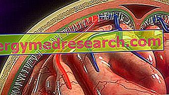 Менинги: Кто они?  Анатомия, функции и патологии твердой мозговой оболочки, Aracnoide и Pia Madre А. Григуоло