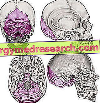 Occipital ben av A.Griguolo