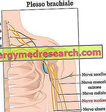 Nervul radial | Anatomie si fiziologie, Leziunea nervului radial în articulația cotului
