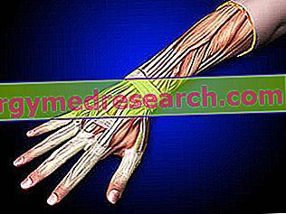 tratamentul antebrațului cum să tratezi articulațiile de castraveți
