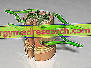 Dural Sack: Kaj je to?  Anatomija in funkcija.  Patologije in klinična uporaba A.Griguolo