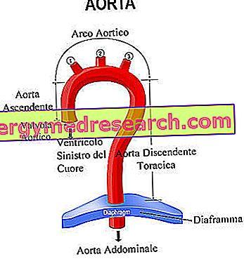 Társkereső oldal bariatric betegek számára