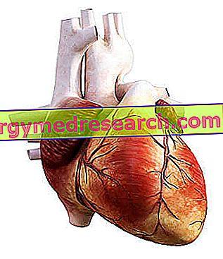 Coronaria: ¿Qué son?  Anatomía: Origen y Curso;  Funciones;  Patologías de A.Griguolo.