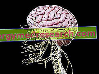 makšties nervo hipertenzija. žmonėms hipertenziją lemia dominuojanti autosominė