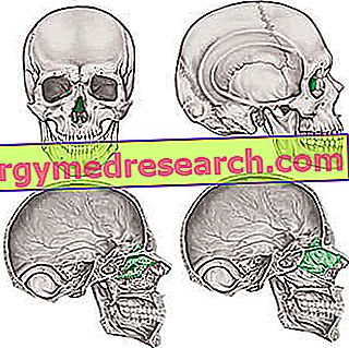 Etmidas: kas tai?  A.Griguolo anatomija, ossifikacija, funkcija ir patologijos