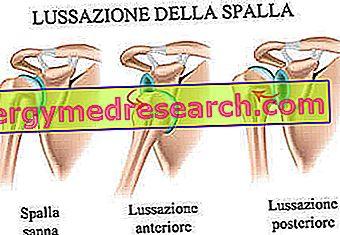 articulații ale umărului și ale brațului