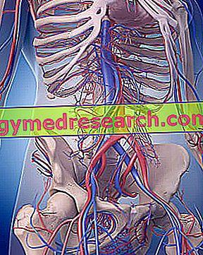 Plautinė hipertenzija - Ligos - Ligos, sveikata, vaistai - tralistas.lt