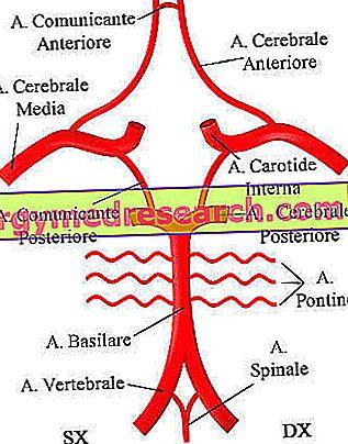 stuburo arterijos sindromo hipertenzija dietos pagal 2 tipo diabetą ir hipertenziją meniu