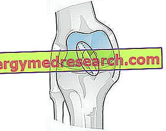 Anterior Crusader Ligament: Mi ez?  A.Griguolo anatómiája, funkciója és patológiái