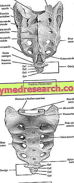 osso-sacro-3.jpg