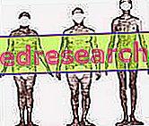 Biotipoloģija un antropoloģiskais novērtējums: muskuļu panākumu atslēga