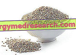 Quinoa: Ruralna svojstva, uloga u prehrani i uporaba u kuhinji R.Borgaccia