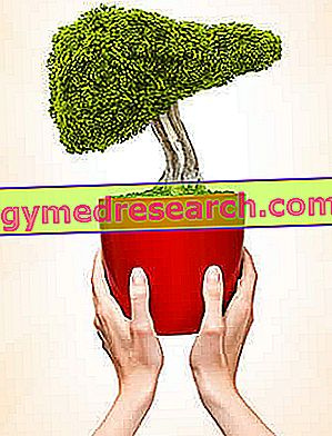 食事とB型肝炎
