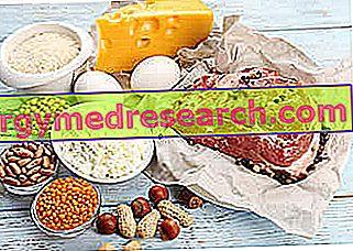 Dieta alta en proteínas y pérdida de mineral óseo.