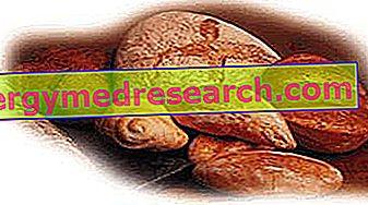 النظام الغذائي والكربوهيدرات