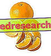 Η διατροφή του κίτρινου και του πορτοκαλιού