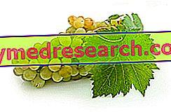 Středomořská strava 2100 2200 kalorií, příklad