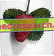 Kost og glykæmisk indeks