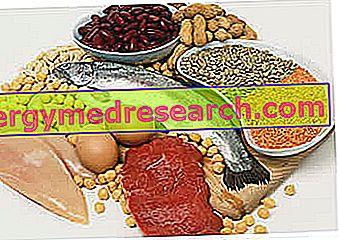 Dieta de proteínas para bajar de peso