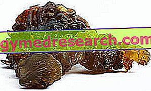 Commiphora mukul și Guggulsteroni