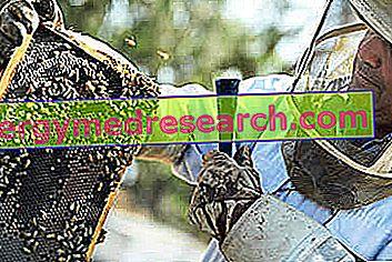 Producția de miere: degresare, topire, decantare și filtrare, încălzire