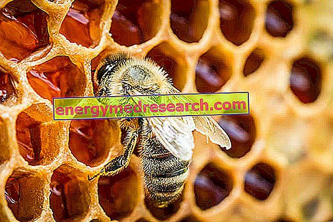 Med - opredelitev, vrste medu in proizvodne tehnike