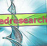 Risiko for genetisk doping