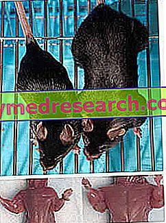 Genetic Doping - IGF-1, Myostatin, Growth Hormone, Doping Test