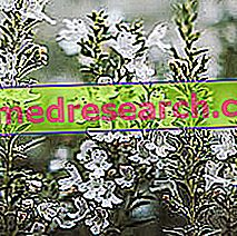 Timo in Herbalist: Eigendom van Timo